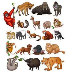 Wild animals on white background vector