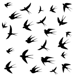 Swallows picture vector