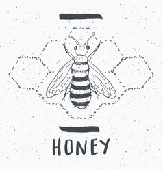 vintage label hand drawn bee grunge textured vector image