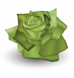lime rose vector image