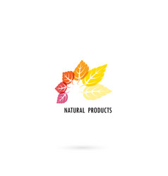 circle of colorful leaves icon with nature vector image