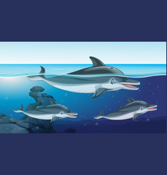 Three dolphins swimming in the ocean vector