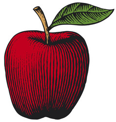 apple vintage engraved vector image