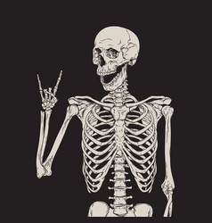 human skeleton posing over black background vector image