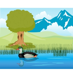 Duck sails in pond vector