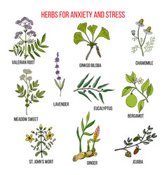 Anxiety treatment herbs collection vector