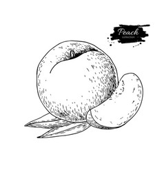 Peach drawing isolated hand drawn peach vector
