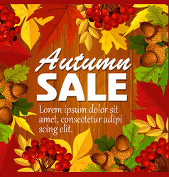 Autumn sale poster leaf rowan berry acorn vector