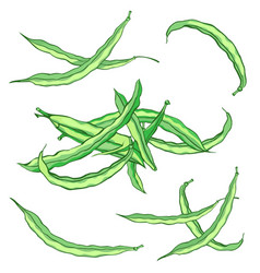 green string beans set without gradients vector image