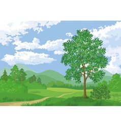 Landscape summer forest and maple tree vector image