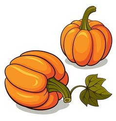 Ripe Pumpkins vector image vector image