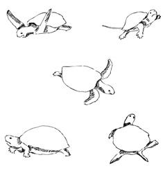 Turtles pencil sketch by hand vector
