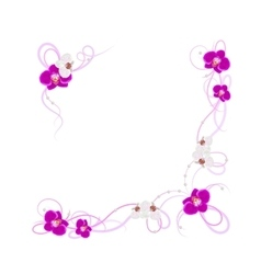 Arrangement of orchid flowers vector image