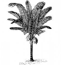 Plant arenga pinnata vector