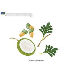 Breadfruit a native fruit in solomon islands vector