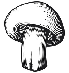 Champignon mushroom vintage engraved vector