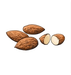 Whole and cut almond nuts isolated on white vector