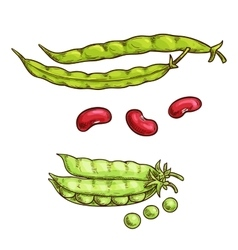 Green pea pod and beans sketch icons vector image