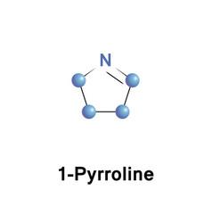 pyrrolines are dihydropyrroles vector image vector image