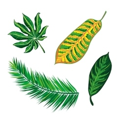 Tropical leaves collection isolate vector