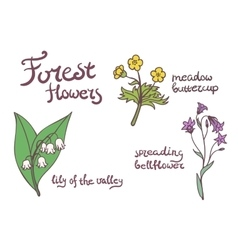 Forest flowers set vector image vector image