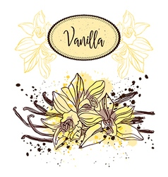 vanilla pods and flowers vector image