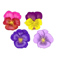 Set of pansy vector
