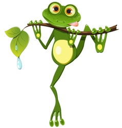 Frog on a branch vector