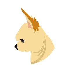 Dog head chihuahua vector