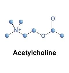 Acetylcholine vector