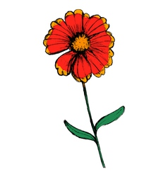 Field flower vector