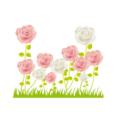 Colorful rose bush in pasture floral design vector