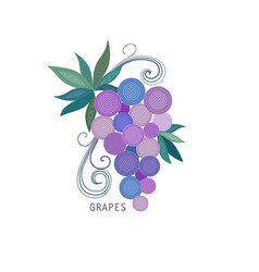 grapes bunch with with leaves vector image