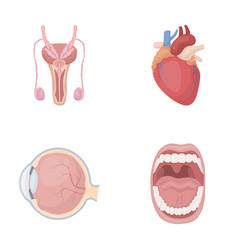 Male system heart eyeball oral cavity organs vector