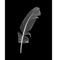White Bird Feather Drawn in Black Background vector image vector image