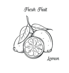 Hand drawn lemon icon vector