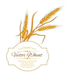 Wheat ear card vector image vector image