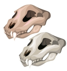 Old skull of saber-toothed tiger or other animal vector
