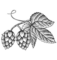 hops icon with leaves vintage engraved vector image