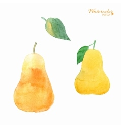 Fruits pears vector