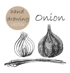 Hand drawn onion monochrome sketch vector