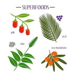 Set of superfood goji acai chia sea-buckthorn vector