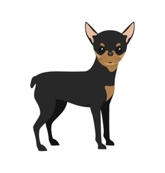 Pinscher dog cartoon vector