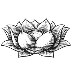 lotus flower vintage engraved vector image