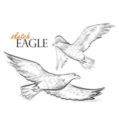 Freehand sketch of flying eagle vector