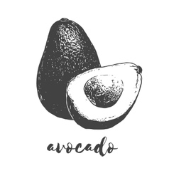Organic avocado fruit vector