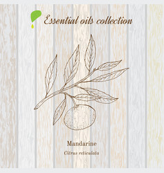 Pure essential oil collection mandarine wooden vector