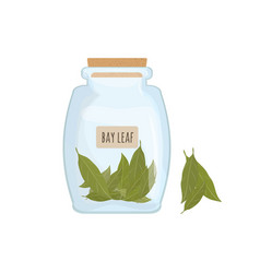 Dried bay leaves stored in clear jar isolated on vector