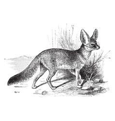 Fennec fox vintage vector