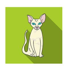 peterbald icon in flat style isolated on white vector image vector image